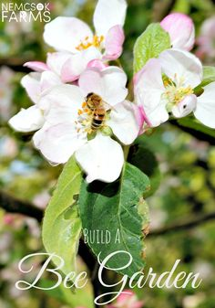 How to Build a Bee Garden with bee friendly food and shelter