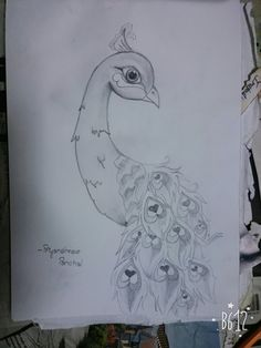 #Peacock Drawings