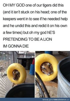 18 Derpy Animal Memes that are both adorable and funny .- 18 Derpy Animal Meme, die sowohl bezaubernd als auch witzig sind – Aww – 18 Derpy Animal Memes that are both adorable and funny – Aww – # adorable - Cute Animal Memes, Animal Jokes, Cute Funny Animals, Funny Animal Pictures, Cute Baby Animals, Funny Cute, Hilarious Animal Memes, Funny Pics, Animal Funnies