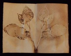 """Eco Prints Eco prints are prints of leaves and plants made by steaming the plants between leaves of paper. The results can be stunning and surprising or disappointing. There are many """"recipes"""" an…"""