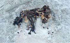 Preservados bajo el hielo durante casi un siglo, los restos de soldados muestran los horrores de la guerra