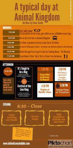 A Typical Day at Animal Kingdom disney animal kingdom #disney