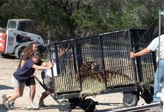 Tigers in America - Rescuing Tigers & Supporting Sanctuaries