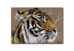 TIGER 8 portrait big cat feline pencil painting Sandrine Curtiss Art Limited Edition Print ACEO by Sandrinesgallery
