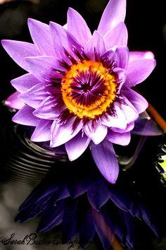 Gorgeous flower