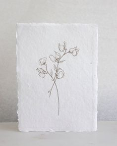 Flower Drawing Sweet Pea - Esther Clark - High-quality digital print on white, lightly textured acid-free paper. Created from an original, hand-drawn illustration by Esther Clark. Easy to frame at x Botanical Art, Botanical Illustration, Floral Illustrations, Sweet Pea Tattoo, Mini Mundo, Sweet Pea Flowers, Watercolor Poppies, Grafik Design, Wedding Stationary