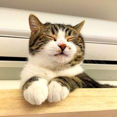mariusu:Meow~~meow good morning (by Jill-Wang)