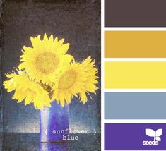 sunflower blue - Design Seeds