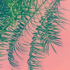 Jungalow Loves: Plants on Pink