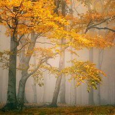 Fairyland in Switzerland; nature photography by photographer Tomáš Morkes.
