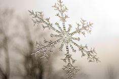 ❅❄❇ᎦησฬƒℓąƘҽȿ     Real Snowflake