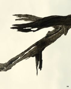 Amazon dead trees - by gg