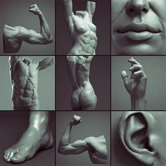 Digital Sculpting Human Anatomy Studies, Adrian Spitsa