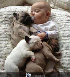 Your furry animal can be your absolute best childhood friend. So much so, that kid often tries to do everything with their dog or cat.