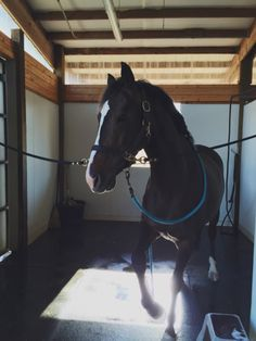 sarahkarmann:  She was seriously unhappy with getting a second bath this week  oh my god this horse is beautiful