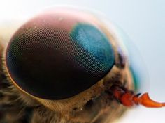 insect eye