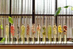 LUFF   Herbarium