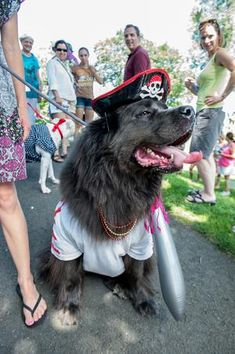 Aaarrggghhh....Newf makes a splash in the Salty Dog Parade