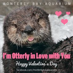 """I'm Otterly in Love with You"" Valentine's Day sea otter ocean e-card"