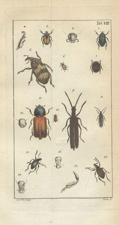 Image taken from page 355 of 'Reise nach Dalmatien und in das Gebiet von Ragusa'   by The British Library