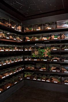 Coolest Tarantula Room ever -- The Reptile Room