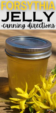 Jelly made from flowers is a tasty way to use the flowers already growing in your yard. Here's how to make forsythia jelly from that early spring flowering bush! Includes canning instructions so you can preserve your homemade jelly all year!
