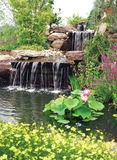 waterfall into lilly pond by cathleen