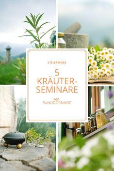 Kräuterseminare am Sanddornhof Kraut, Place Cards, Place Card Holders, Yoga, Edible Plants, Drying Herbs, Small Groups, Healthy Herbs, Medicinal Plants