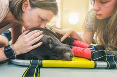 #Wie kranke Haustiere ihre Besitzer belasten - SPIEGEL ONLINE: SPIEGEL ONLINE Wie kranke Haustiere ihre Besitzer belasten SPIEGEL ONLINE…