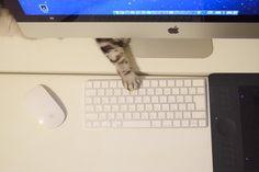 """ざわこさんのツイート: """"サクサク作業したくてiMacにかえたのにノートの時より格段に作業効率が落ちている…?… """""""