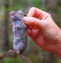 101 Gardening: #Ideas : How to get rid of voles in your garden