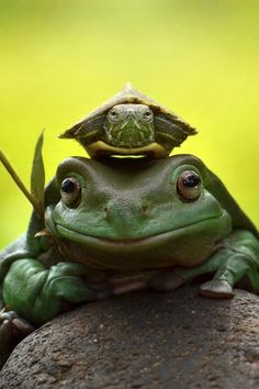 ~~throne of king | frog and turtle | by fahmi bhs~~