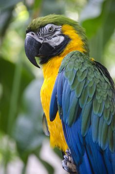 Macaw parrot Flickr