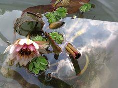 Water garden - by Violarancio