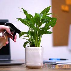 DIY ideas, tips and tricks. - - DIY ideas, tips and tricks. Indoor Garden, Garden Art, Garden Design, Indoor Plants In Water, House Plants Decor, Plant Decor, Garden Projects, Diy Projects, Suculentas Diy