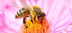August 15th is World Honey Bee Day