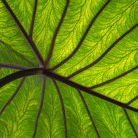 4 Amazing, Evidence-Backed Bone-Saving Powers Of Chlorophyll (And How To Get More Of It)