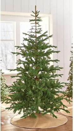 Amazon.com: 7.5 ft. Indoor Norwegian Spruce Hinged Artificial Christmas Tree: Home & Kitchen Natural Christmas Tree, Spruce Christmas Tree, Live Christmas Trees, Christmas Love, Country Christmas, Christmas Holidays, Artificial Christmas Trees, Martha Stewart Christmas, Woodland Christmas