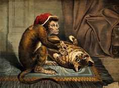 A monkey physician examining a cat patient for fleas - Artist unknown, date unknown
