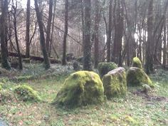 Bards In The Woods: Sunfullness at Knockranny Woods & Well