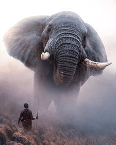 100 Love Quotes, Love Motivation Quotes, Motivational and Inspirational Quotes - Brain Hack Quotes African Elephant, African Safari, Photomontage, Beautiful Images, Animals Beautiful, Animal Lover Quotes, Entrepreneur, Wallpaper Keren, Room Wallpaper