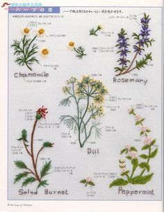 花的刺绣 - 琳2 - Picasa Web Albums ............ (French knots: Chamomile, Dill, Peppermint )