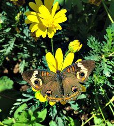 Desert Botanical Garden - Butterflies