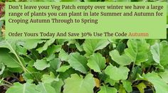 Order you Autumn veggies now and save just enter the code autumn at checkout Veg Patch, Allotment Gardening, Allotments, Grow Your Own, Late Summer, Herbs, Autumn, Vegetables, Winter