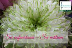 Aufmerksamkeit, klein Plants, Tips, Flora, Plant, Planting