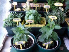 Autor: Džesina Plants, Author, Plant, Planets