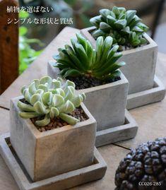 特集 : Cement Pot / セメントポット - 植木鉢とテラコッタの専門店|おしゃれな植木鉢なら鉢人