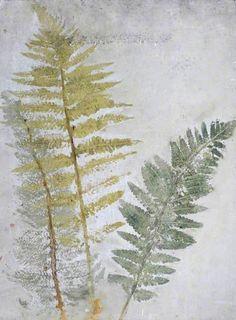 "Joséphine Bowes ""Sketch of Ferns"""