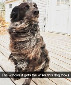 Cute Overload: Internet`s best cute dogs and cute cats are here. Aww pics and adorable animals. Funny Dog Memes, Funny Animal Memes, Funny Animal Pictures, Cute Funny Animals, Funny Cute, Funny Dogs, Cat Memes, Cats Humor, Funny Kitties