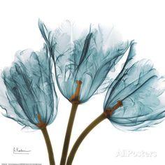 Tulips in Blue Lámina